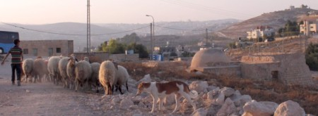 Bethlehem shepherds